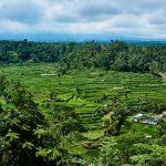 Indonesia033